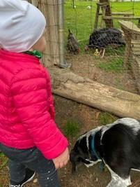 Child discovering turkeys & chickens